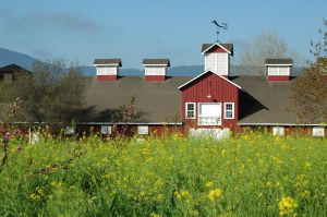 [12-01-09] red_barn_in_mustard.jpg